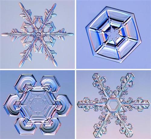 [Image: snowflakes.jpg]